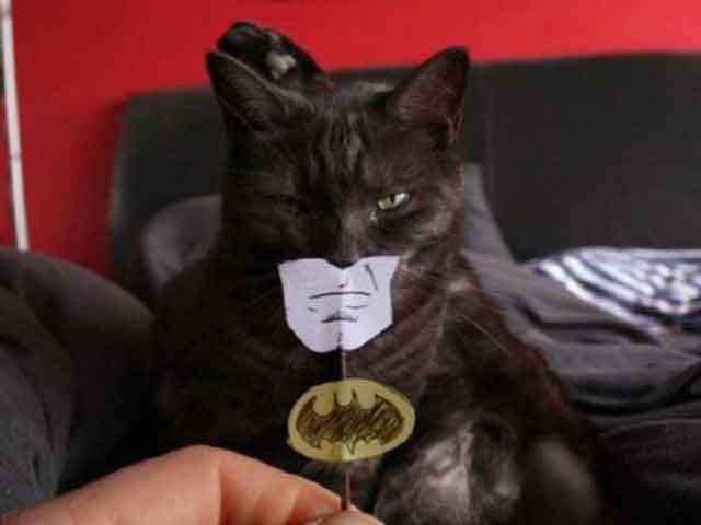 I'm Catman
