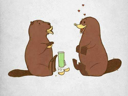 Platypus in love